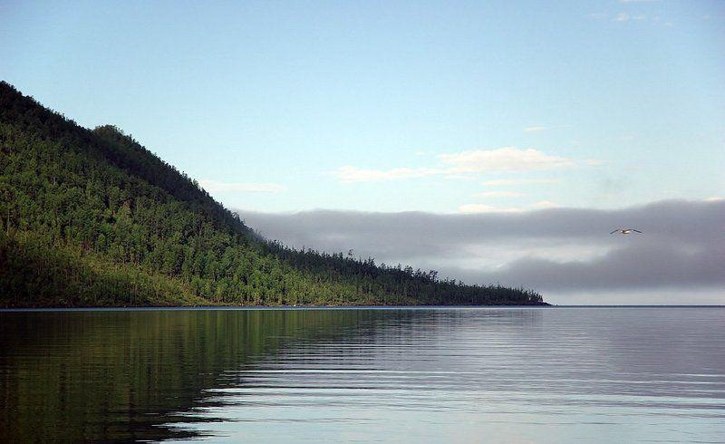 байкал, бухта, аяя, чайка Байкальские зарисовки...photo preview