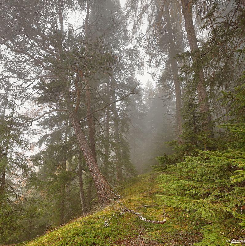 swiss Запах лесаphoto preview