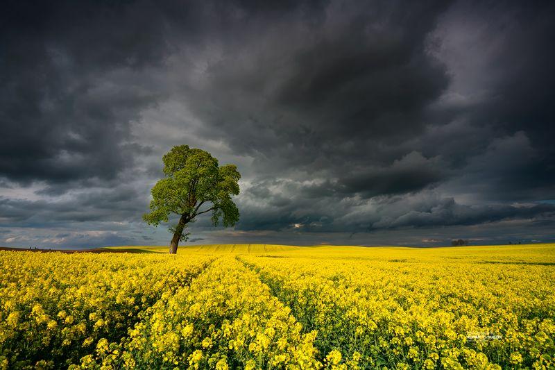 Clouds, landscape, rape, fields, sky, tree,  Cloudy performance.photo preview