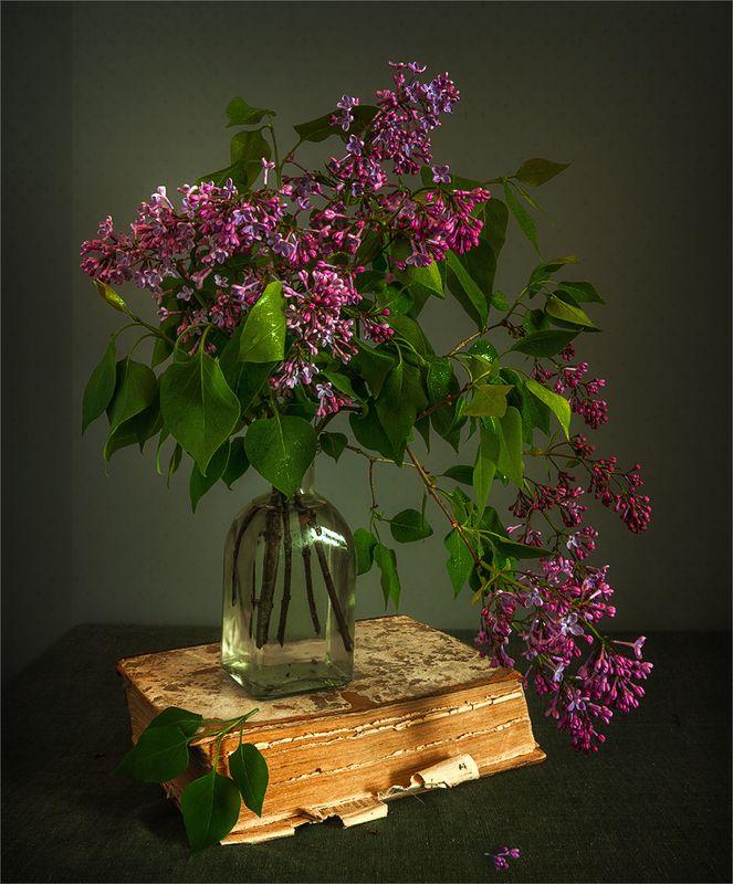 still life, натюрморт,    винтаж,    цветы,  сирень, ветка, весна, книга, натюрморт с цветущей сиреньюphoto preview