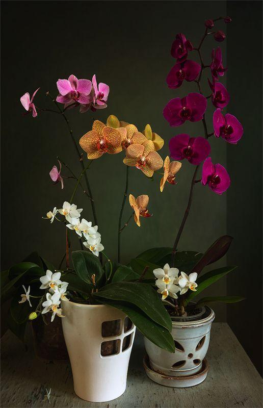 still life, натюрморт,    винтаж,    цветы,  орхидея, натюрморт с орхидеямиphoto preview