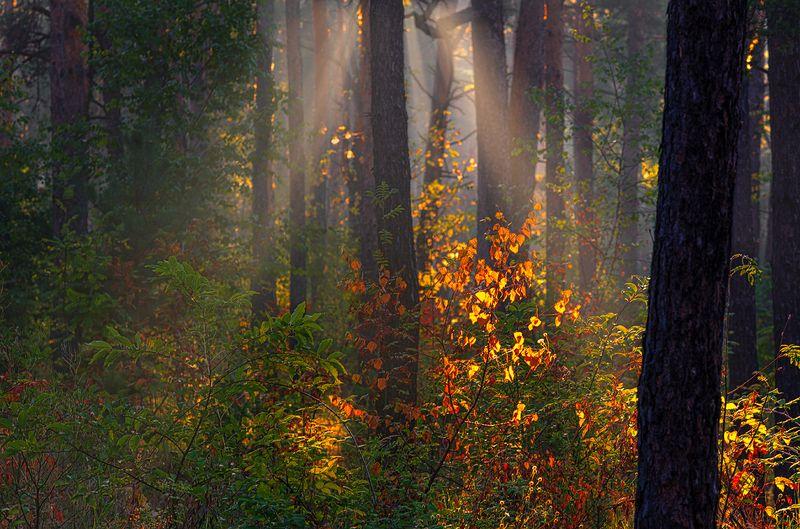 landscape, пейзаж, утро, лес,  деревья, солнечный свет,  солнце, природа, солнечные лучи,  прогулка, еще одно хорошее утроphoto preview