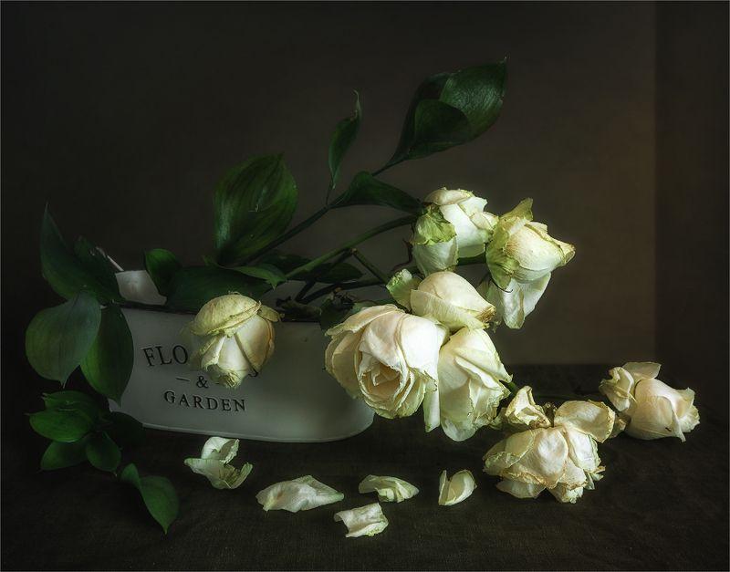 still life, натюрморт,    винтаж,    цветы,  розы, букет отцвелиphoto preview