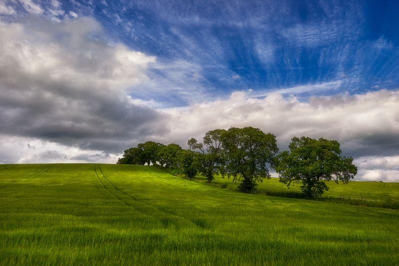 landscape Springphoto preview