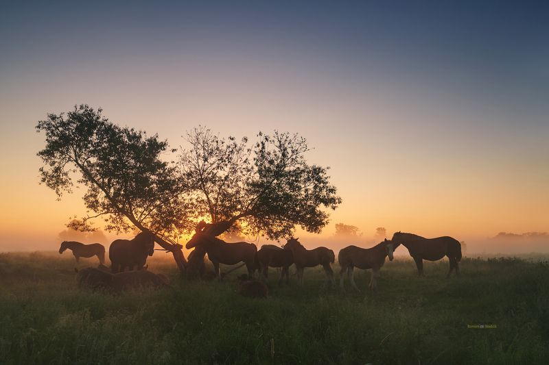 Horses, landscape, sunrise, fog, spring, Horses. photo preview
