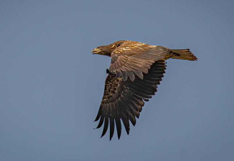 #birds, #raptors, #eagle Let me .....!photo preview