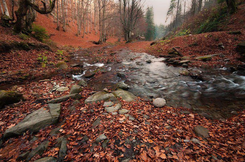 осень, карпаты, ручей, листья Огонь и Водаphoto preview