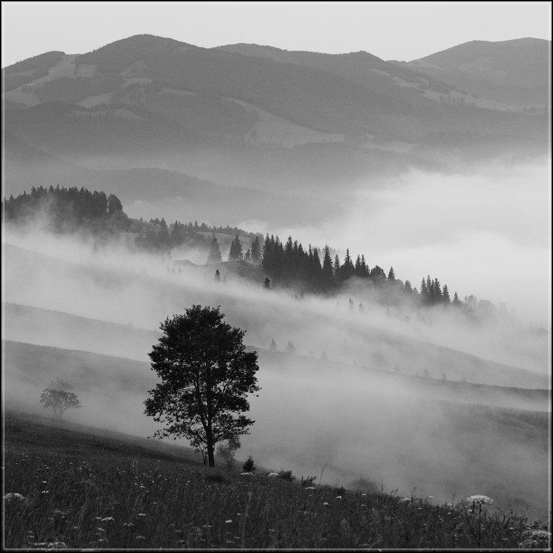 Горы, Туман, Утро Туманphoto preview