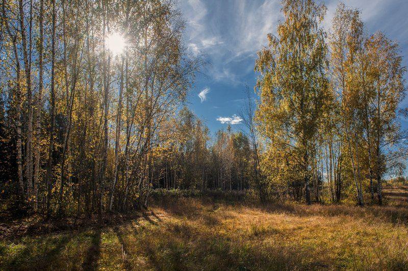 Осенняя,солнечнаяphoto preview