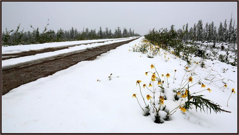 Нежданная зимаphoto preview