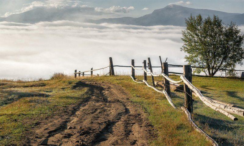 карпаты, природа, пейзаж, туман, черная тиса, горы, утро Шагнуть на небо...photo preview
