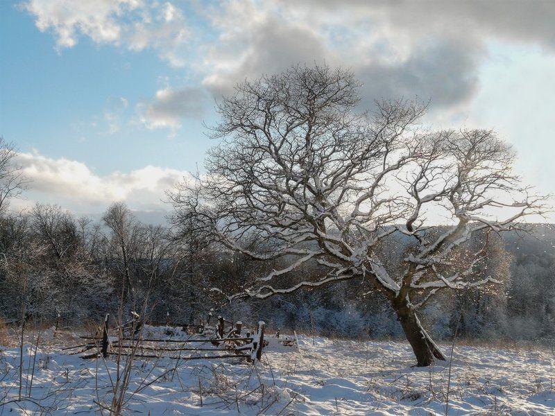 Зима, Хамышки Зимняя открытка из Хамышковphoto preview
