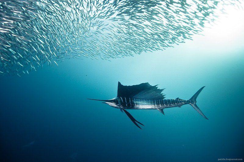 sailfish zenphoto preview