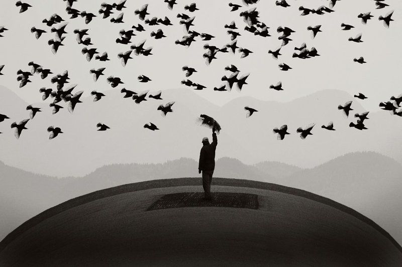 Некоторые птицы летают не могутphoto preview