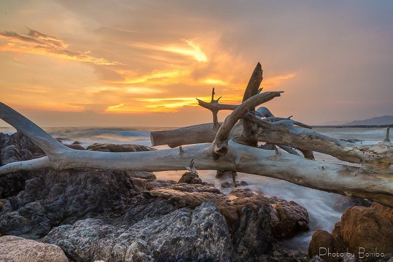 tree, plant, sea, beach, stone, rock, water, sun, sky Sunsetphoto preview