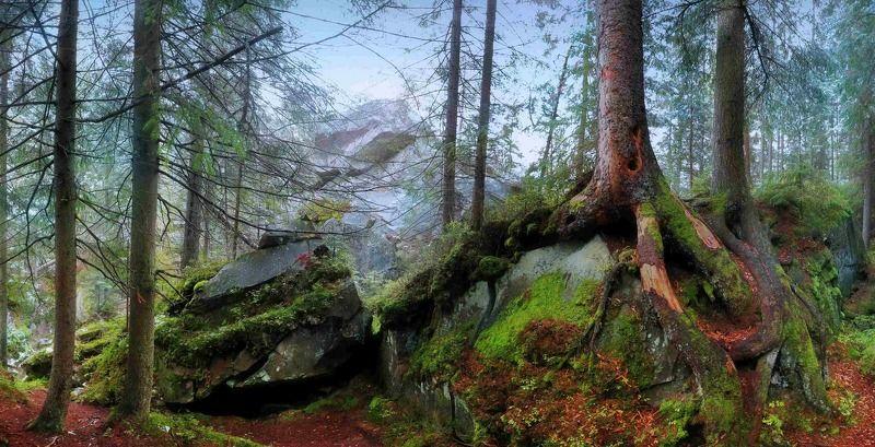 карпаты, лес, яремче, осень Зима сквозь осень...или сказочная дорога к скалам Довбуша (Карпаты)photo preview