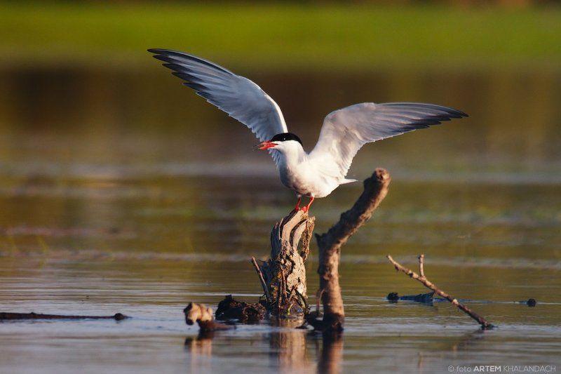 Почти орлан!photo preview