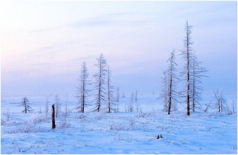 тундра, север, русский север, зима, холодно, иней Холодный крайphoto preview