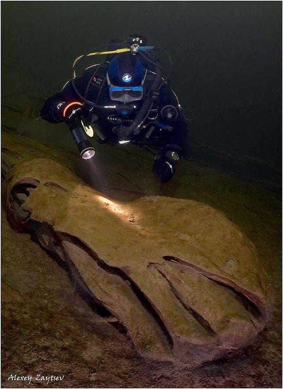 зайцев, обучение, подводной, фотографии, телецкое, озеро Чей туфля`?!photo preview
