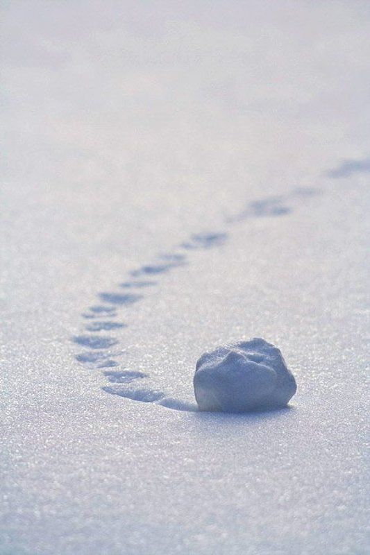 снег, след Следphoto preview