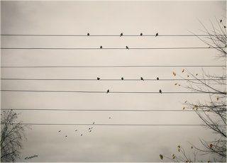 Осенняя мелодия...
