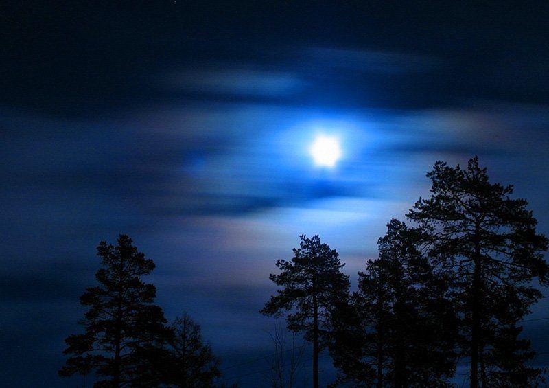 ночь, луна, силует полнолуниеphoto preview