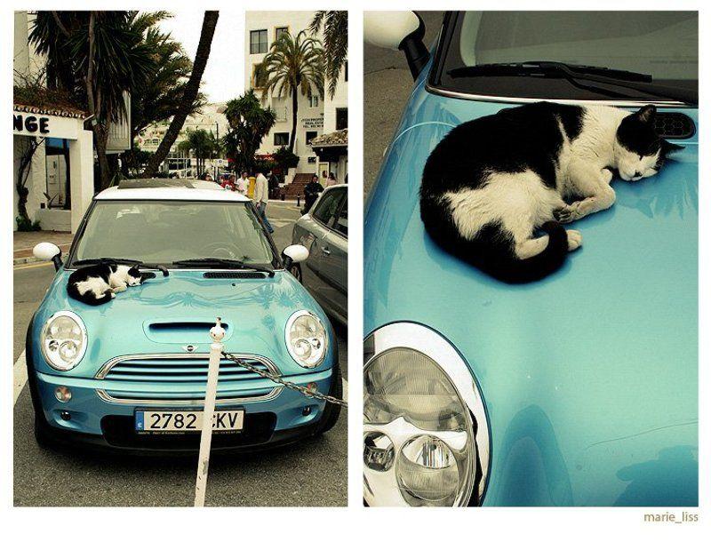 кот, мини,  авто mini-catphoto preview
