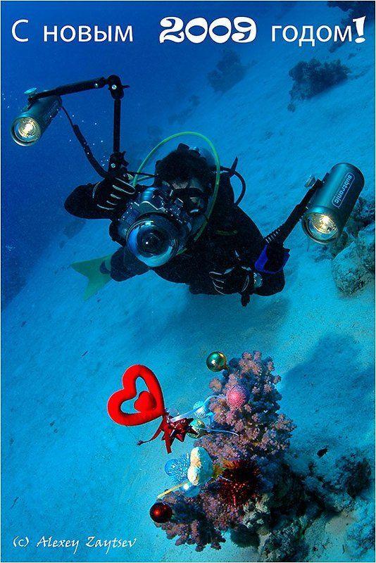зайцев, обучение, подводной, фотографии, красное, море Новогодняя открыткаphoto preview