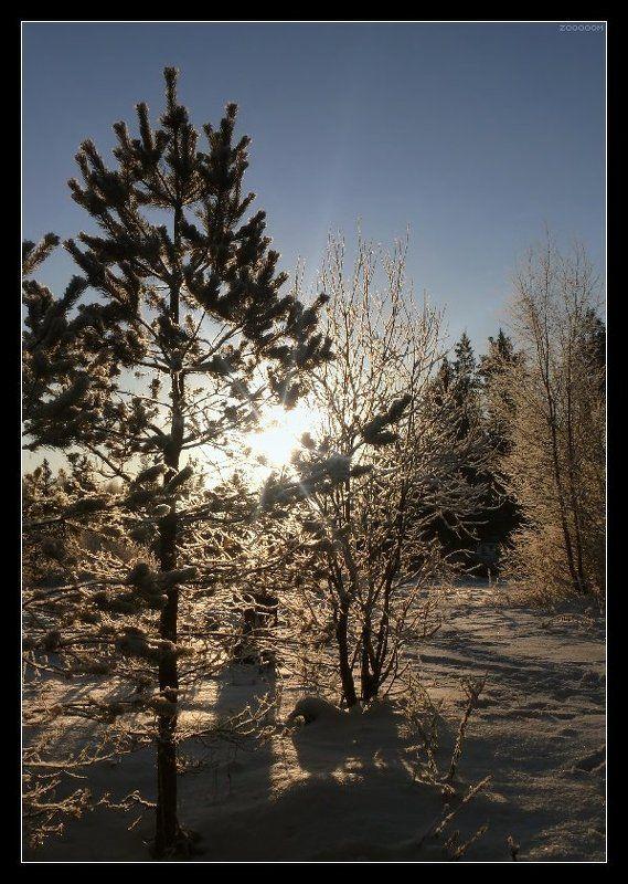 зима Морозное солнцеphoto preview