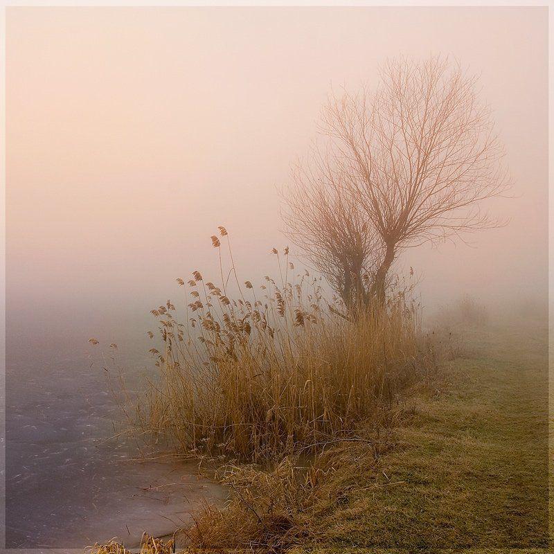пейзаж, зима, утро, озеро, туман, lad_i_mir Зимняя нереальностьphoto preview
