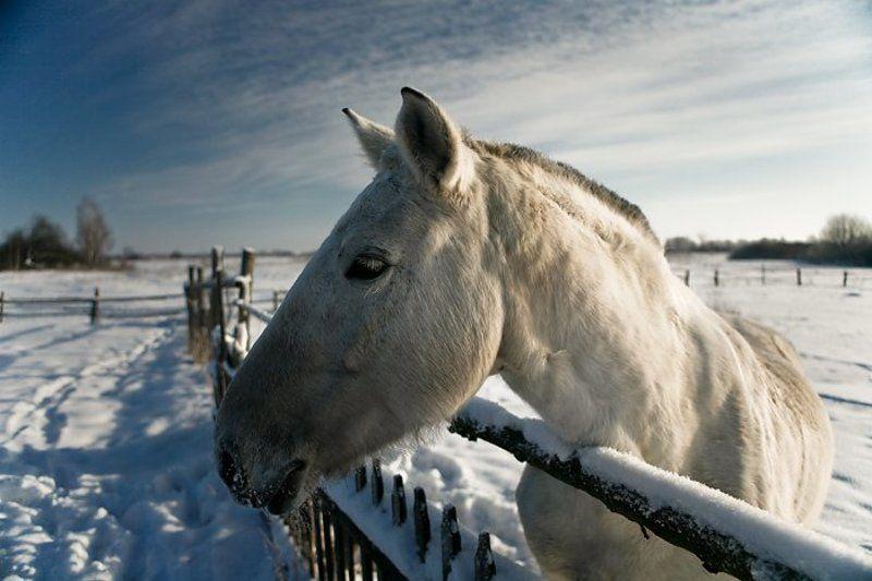 коник, соседская лошадка ***photo preview