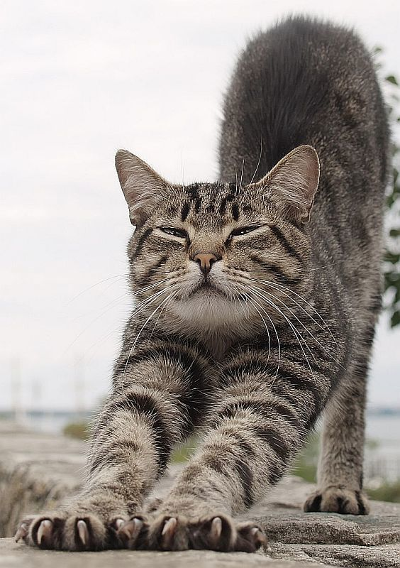 кот, усы, полоски, одесса, порт про полоски и усыphoto preview