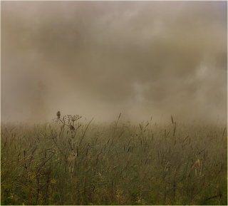 Про свидание двух птичек в тумане 2