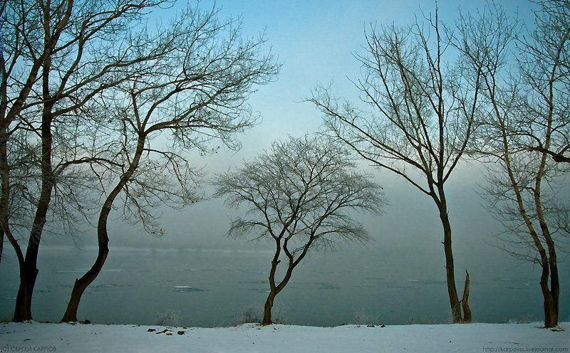 пейзаж, другой, деревья Другойphoto preview