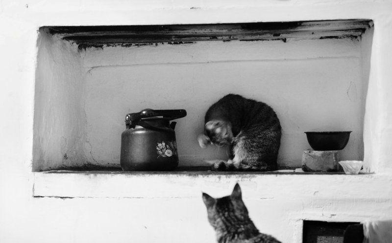 Коты, Печка, Чайник печкаphoto preview