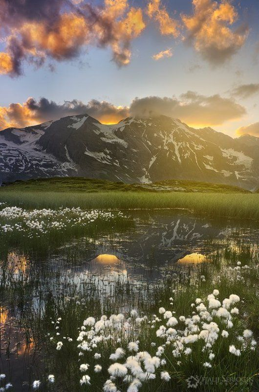Альпийские болотаphoto preview