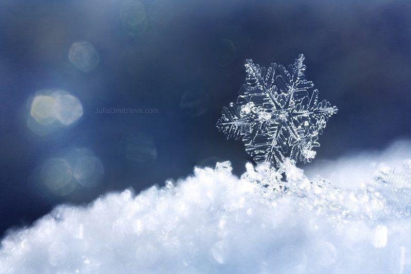 Snowflakephoto preview