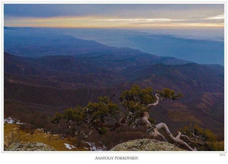 крым, зима, демерджи, южная демерджи, утро, сосна, тучи Утренние далиphoto preview