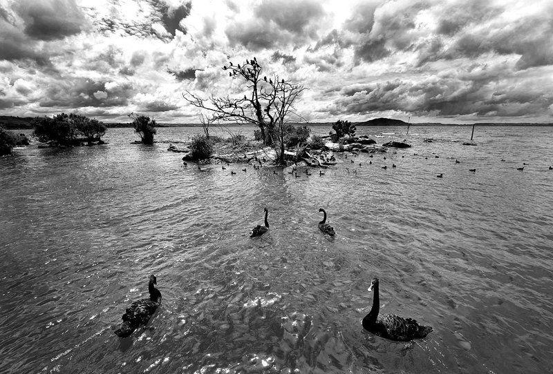 птичий остров...photo preview