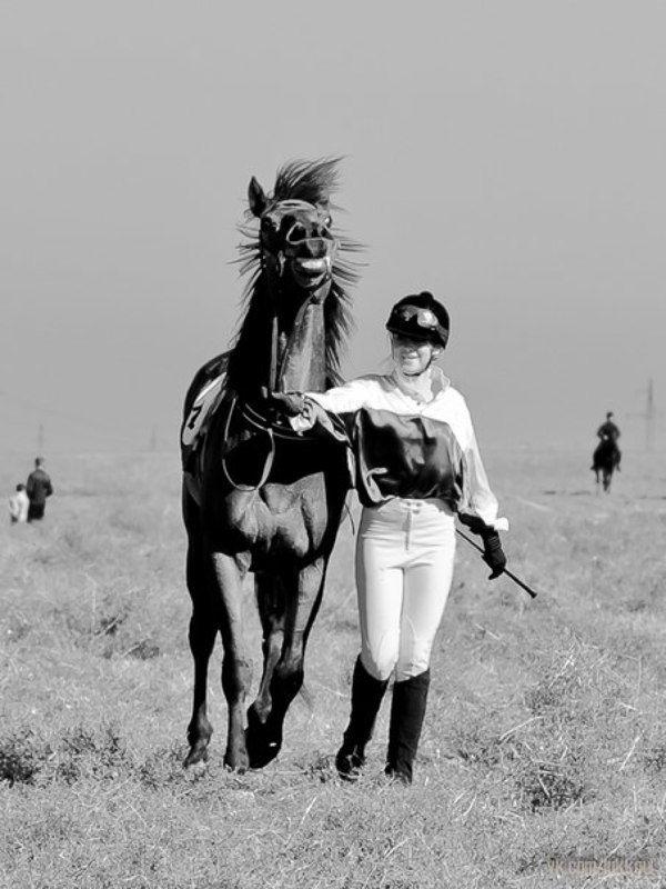 Коняка-ржакаphoto preview