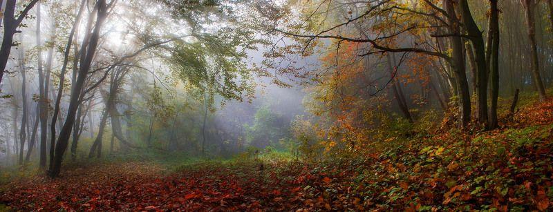 Осенний уютphoto preview