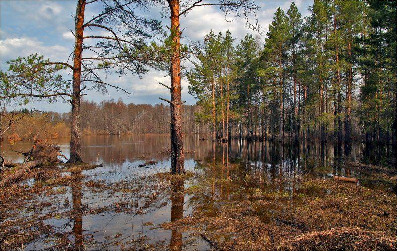 Разлив лесной рекиphoto preview