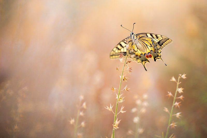 canon, 5dmkii, 100mm l is f2.8, macro, insects, butterflies, mantis, 600d Summer beautiesphoto preview