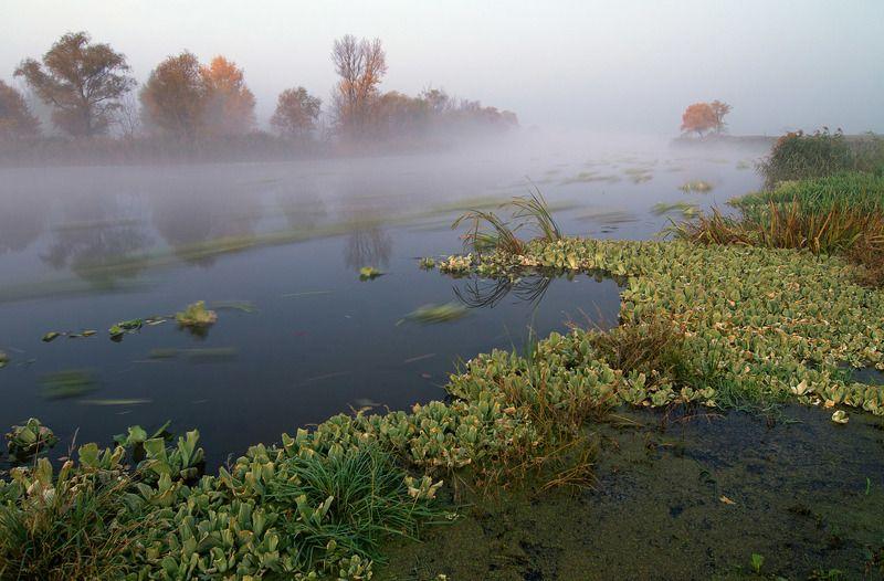 речка , туман, утро, осень вспоминая осеньphoto preview