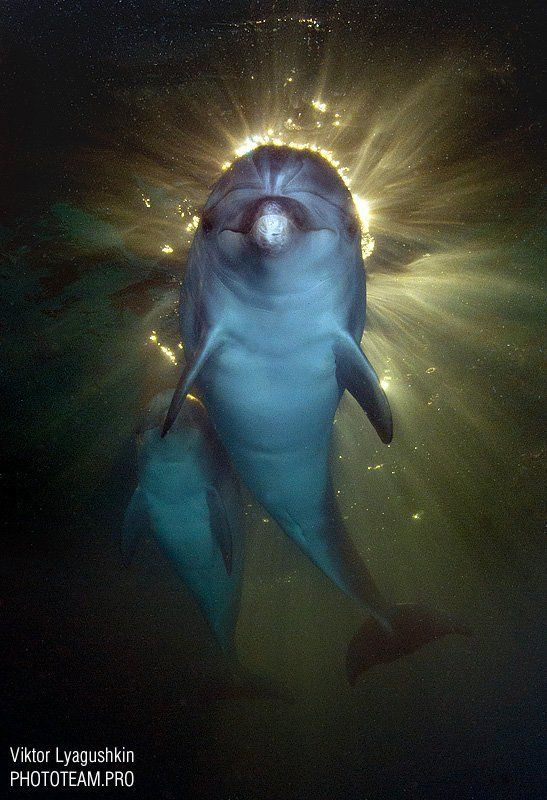 Святой дельфинphoto preview