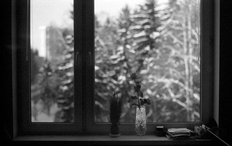 tarbeev Зимний деньphoto preview