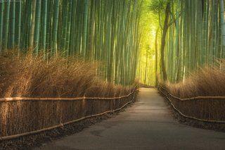 Бамбуковый лес Арашиямы