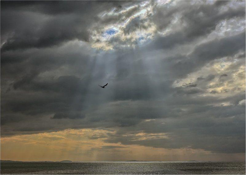 Между тучами и морем гордо реет Буревестник, черной молнии подобный.photo preview