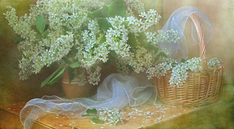 цветы, натюрморт Февралю*photo preview