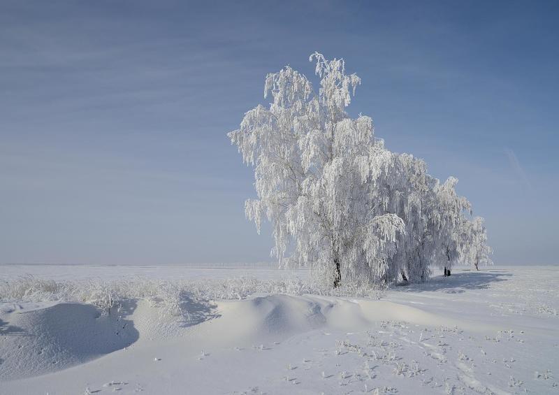 Иней зима, Курская область Белые одежды 2photo preview
